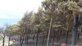 Foto Pinar quemado en Encinedo