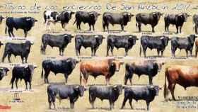 cartel toros medina encierros 1