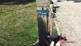 zamora papeleras caninas upl (1)
