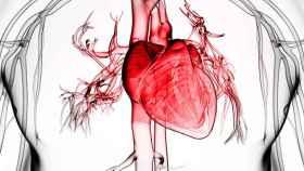 Representación del corazón y los vasos sanguíneos más cercanos.