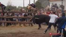 tordesillas-toro-de-la-pena-35