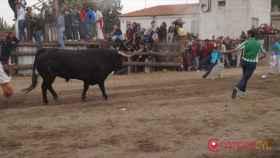 tordesillas-toro-de-la-pena-25