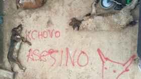 perros asesinados cachobo toro vega valderas 1
