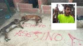 Los perros encontrados muertos por Fran Alcalá 'Cachobo'.