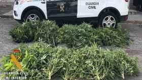 marihuana-burgos