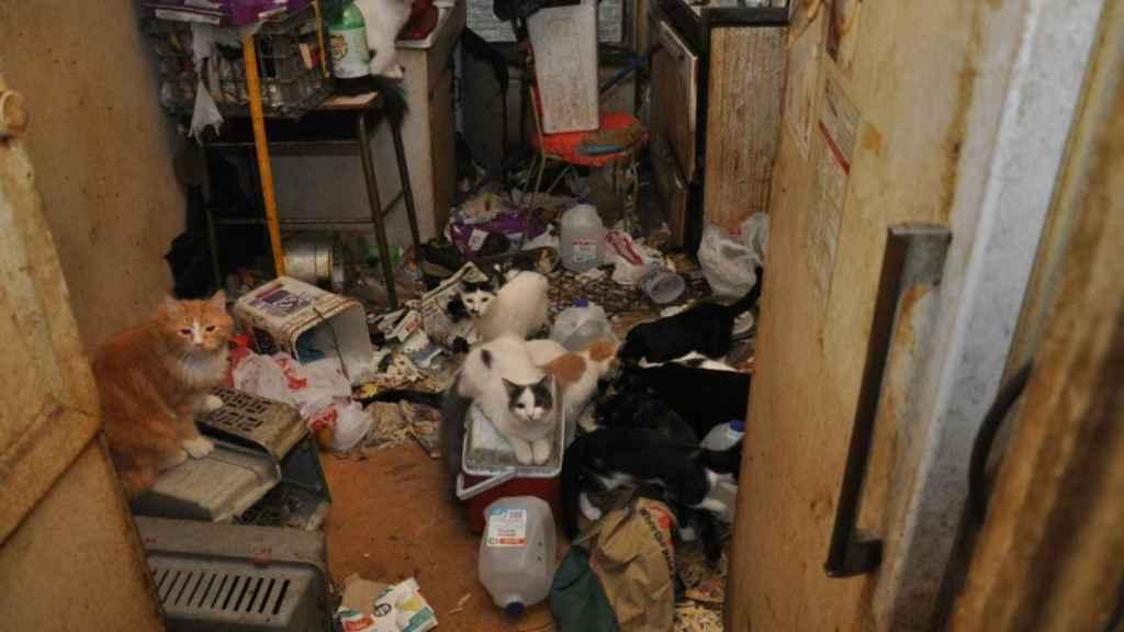 Una casa intervenida por acumulación de animales en Nueva York.