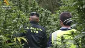 Palencia-marihuana-guardia-civil