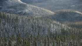 Gran Bosque Boreal.