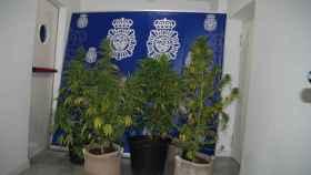 marihauana policia segovia 1