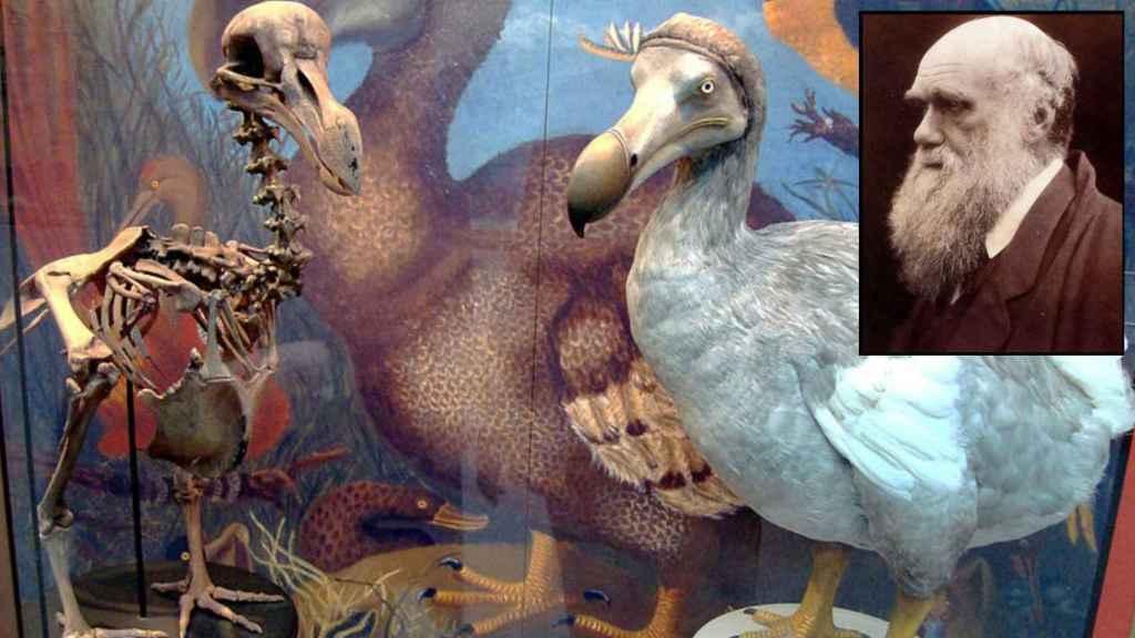 Darwin no se comió al último dodo, pero fue de los pocos que escaparon.