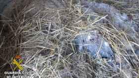 Animal fallecido en el establo de un ganadero.