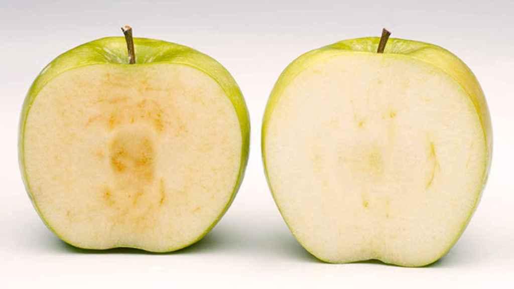 Una manzana tradicional frente a la nueva.