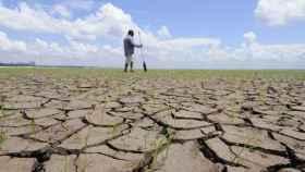 Un terreno afectado por la sequía.