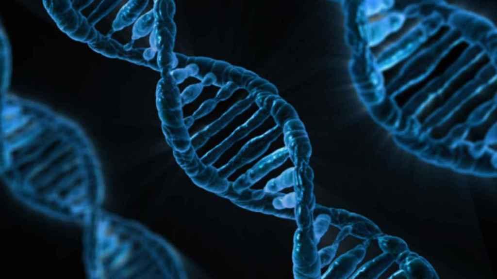 La doble hélice de ADN está compuesta por cuatro bases químicas: adenina (A), guanina (G), citosina (C) y timina (T).