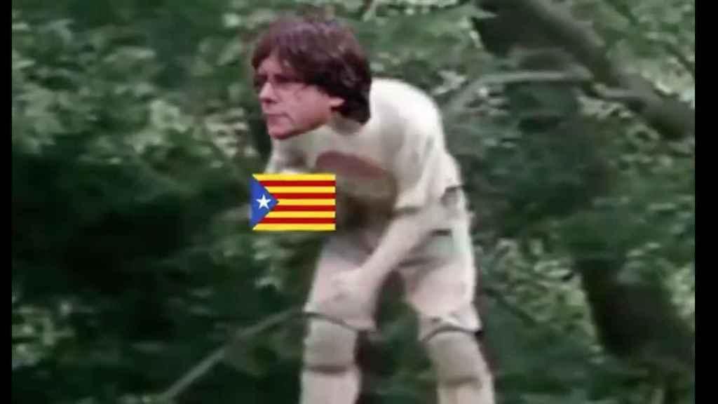 ¡Han matado al Puigdemont Cudeiro!