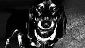 'Lonchas', el perro de Ismael desaparecido por el que ofrece una recompensa de 10.000 euros