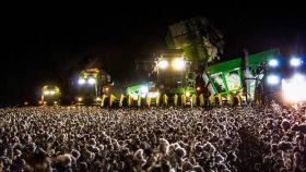 La foto que ha confundido a miles de tuiteros ¿campo de algodón o festival de música?