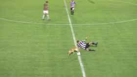 Momento en el que el perro derriba a Marcos Sánchez, jugador del Central Córdoba.