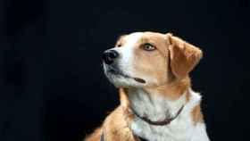 zamora exposicion perros (2)