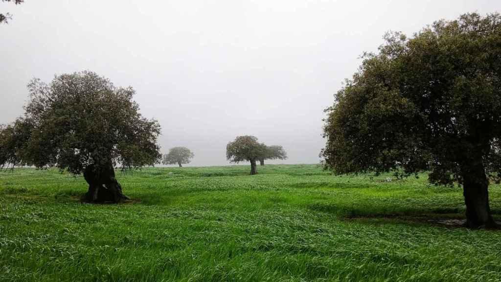 La dehesa es un ecosistema con más de tres millones de hectáreas en nuestro país.
