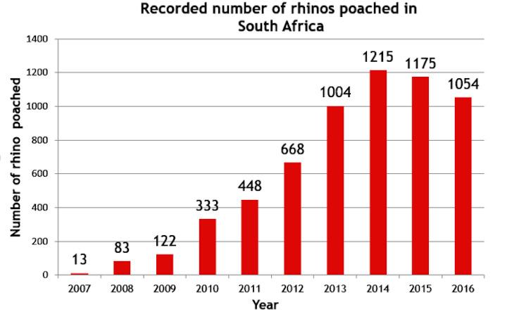 muertes de rinocerontes caza furtiva