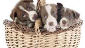 Los cachorros son muy monos, pero hay que educarlos.