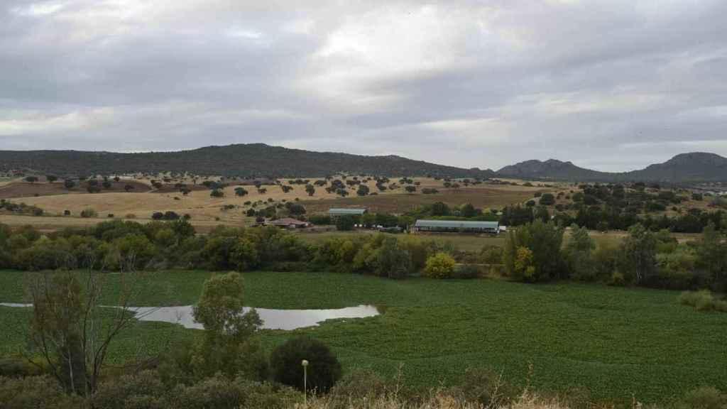 El camalote sobre la superficie del Guadiana a su paso por el municipio de Don Álvaro, en 2016.