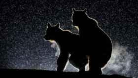 Dos osos manteniendo un encuentro sexual furtivo en plena noche estrellada. Amor del bueno.