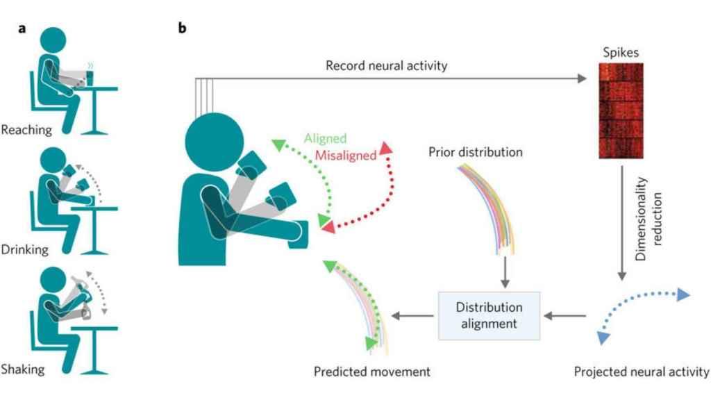 El estudio estudia la respuesta neurológica a movimientos como coger, beber y sacudir.