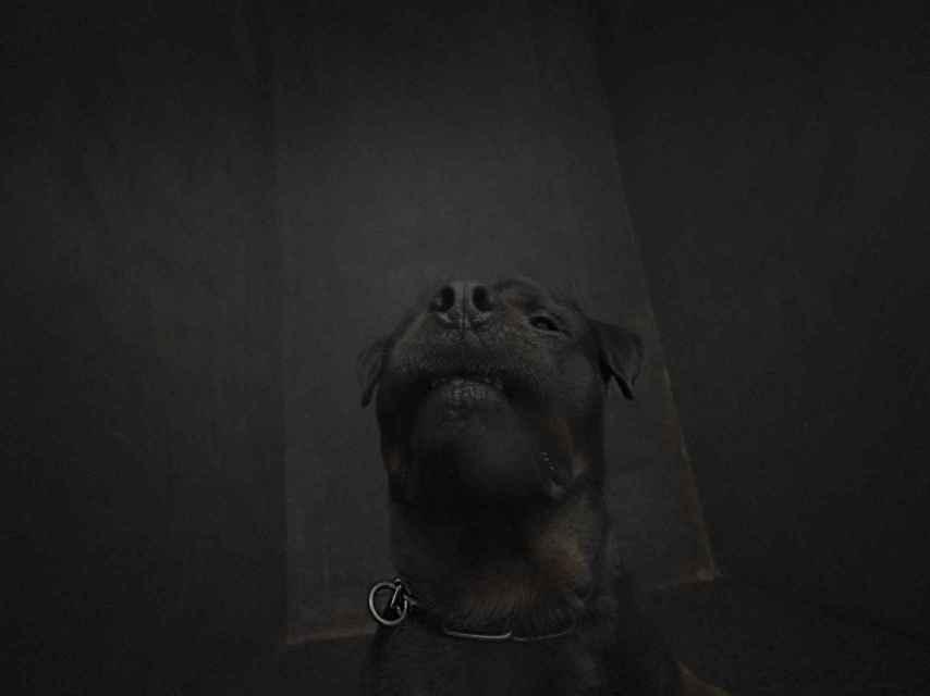 El perro de la polémica sesión de fotos.