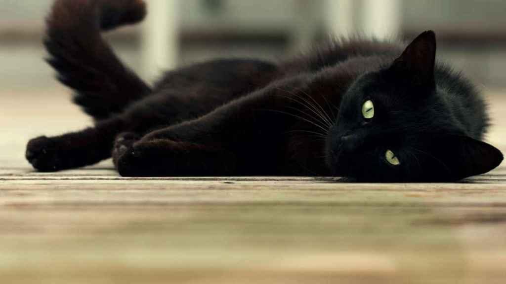 Un gato en una imagen de archivo.