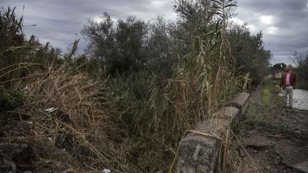 El pasado verano Antonio del Castillo recibió una llamada diciendo que el hermano de Miguel Carcaño trabajó en una finca muy próxima a esta zona barrancosa y de espesa vegetación situada en la carretera de La Rinconada, donde ya se había buscado los restos de la menor.