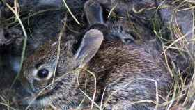 zamora conejos
