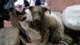 Un perro rescatado del alud de lodo que cubrió la localidad de Tiquipaya en Cochabamba, Bolivia, debido a las fuertes lluvias. REUTERS/Danilo Balderrama.