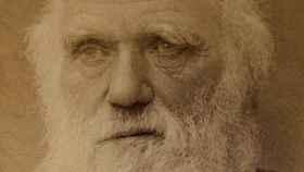 Charles Darwin en 1881.