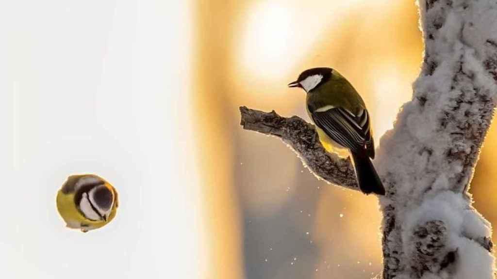 El fotógrafo está causando sensaciones con sus imágenes de la fauna a distancias cortas