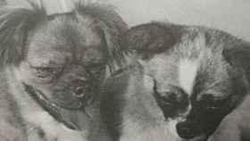 Little Leopard y Shan Shan fueron lanzados al espacio en los años 60