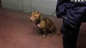 Valladolid-perro-rescatado-bomberos-policia