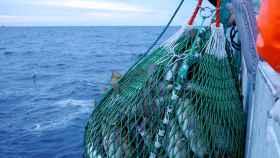 skrei-noruega-pesca