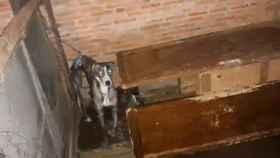 Valladolid-perro-desnutridos-policia-detenidos