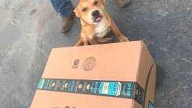 Un repartidor aplasta a un cachorro con un paquete e Internet se le echa encima