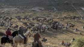 Segovia-encierros-cuellar-toros-interes