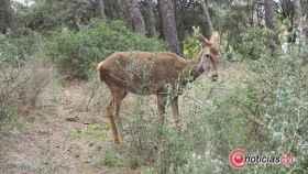 bambi-zamora