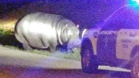Imagen del hipopótamo difundida por la Guardia Civil.