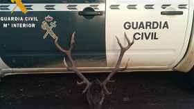 palencia ciervo guardia civil