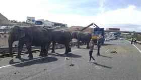 Los elefantes, deambulando por la autovía.