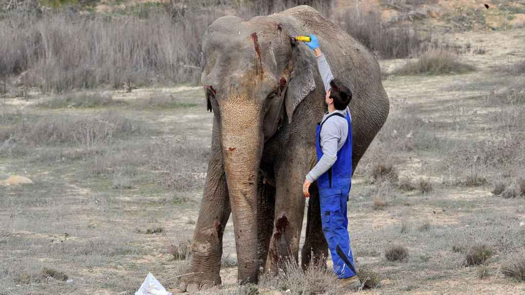 Una de las elefantas supervivientes.
