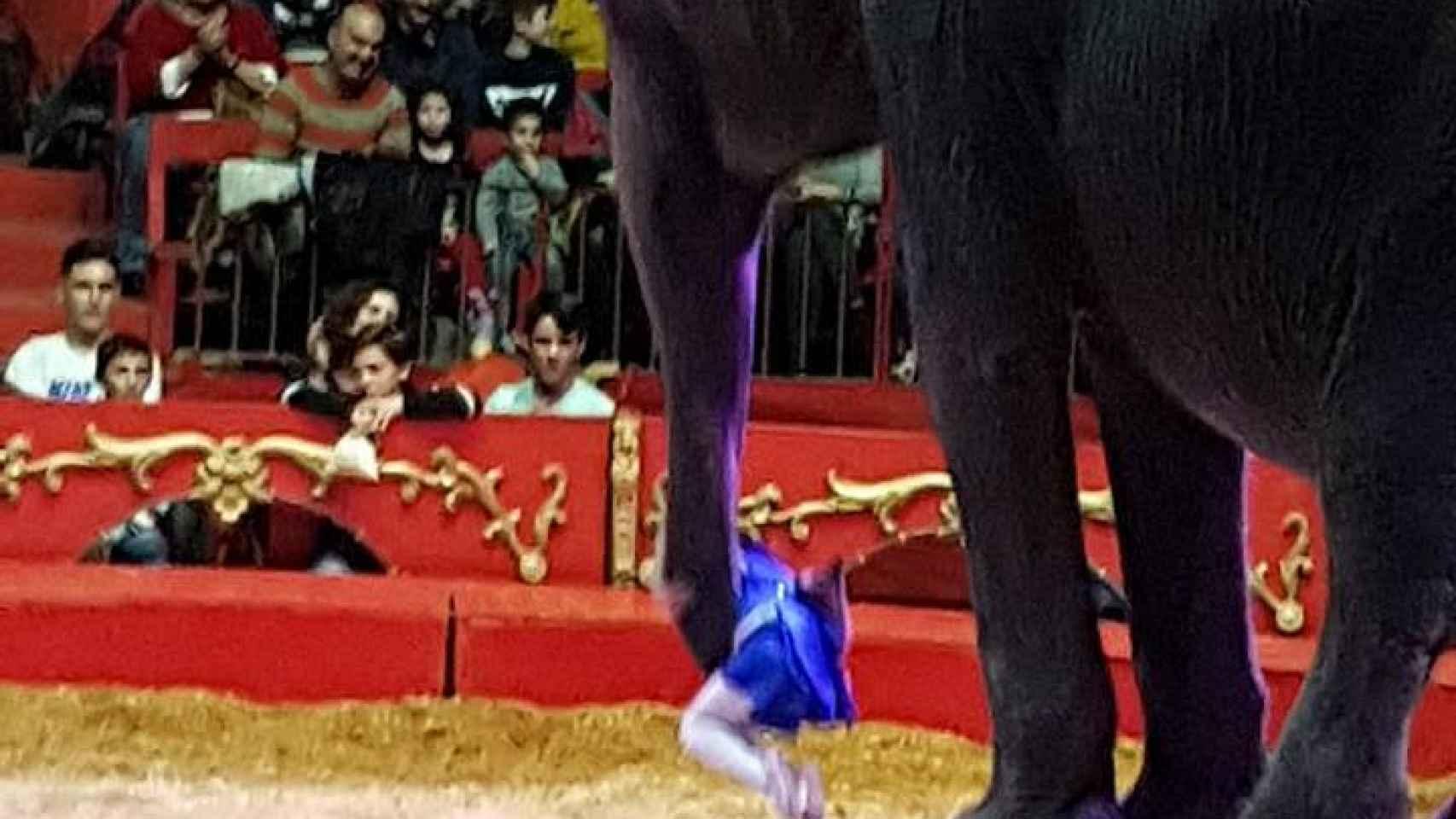 Dana y sus hermanas, la elefanta fallecida en el accidente en Albacete.