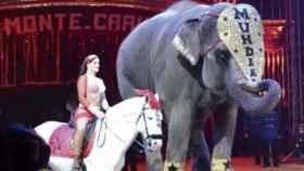 Animales en el circo