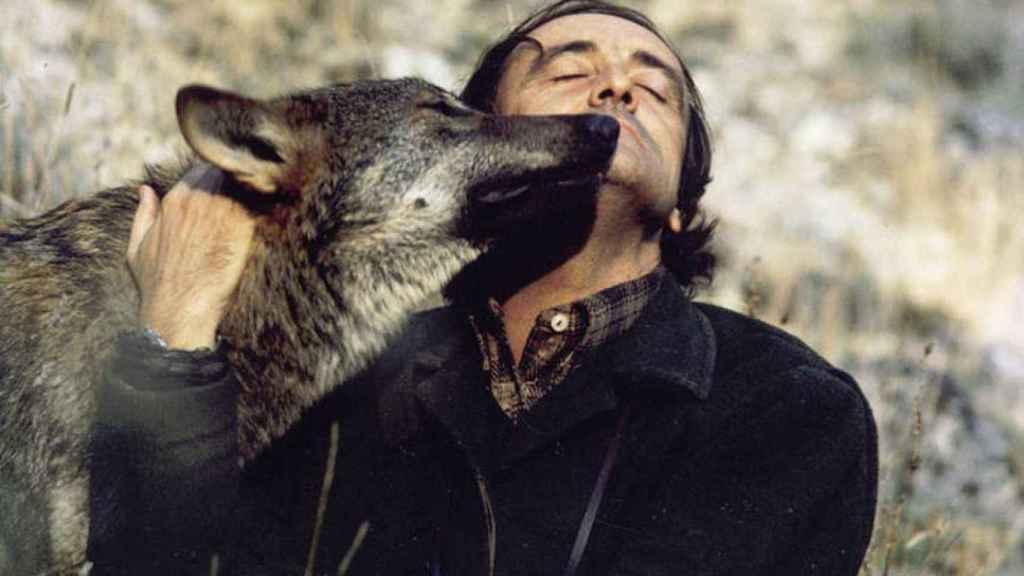Félix Rodríguez de la Fuente con un ejemplar de lobo ibérico.